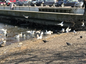 Birds at the harbor
